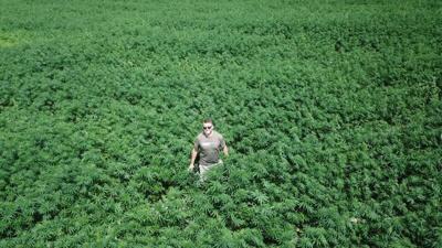 US attorney files civil suit against WV hemp farm | Politics