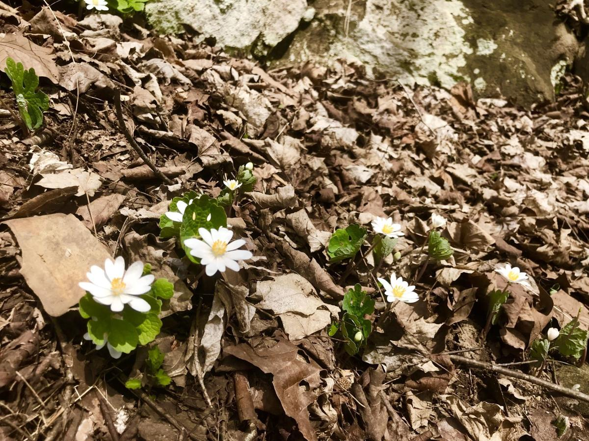 Good to Grow: A scavenger hunt for fast-disappearing springtime ...