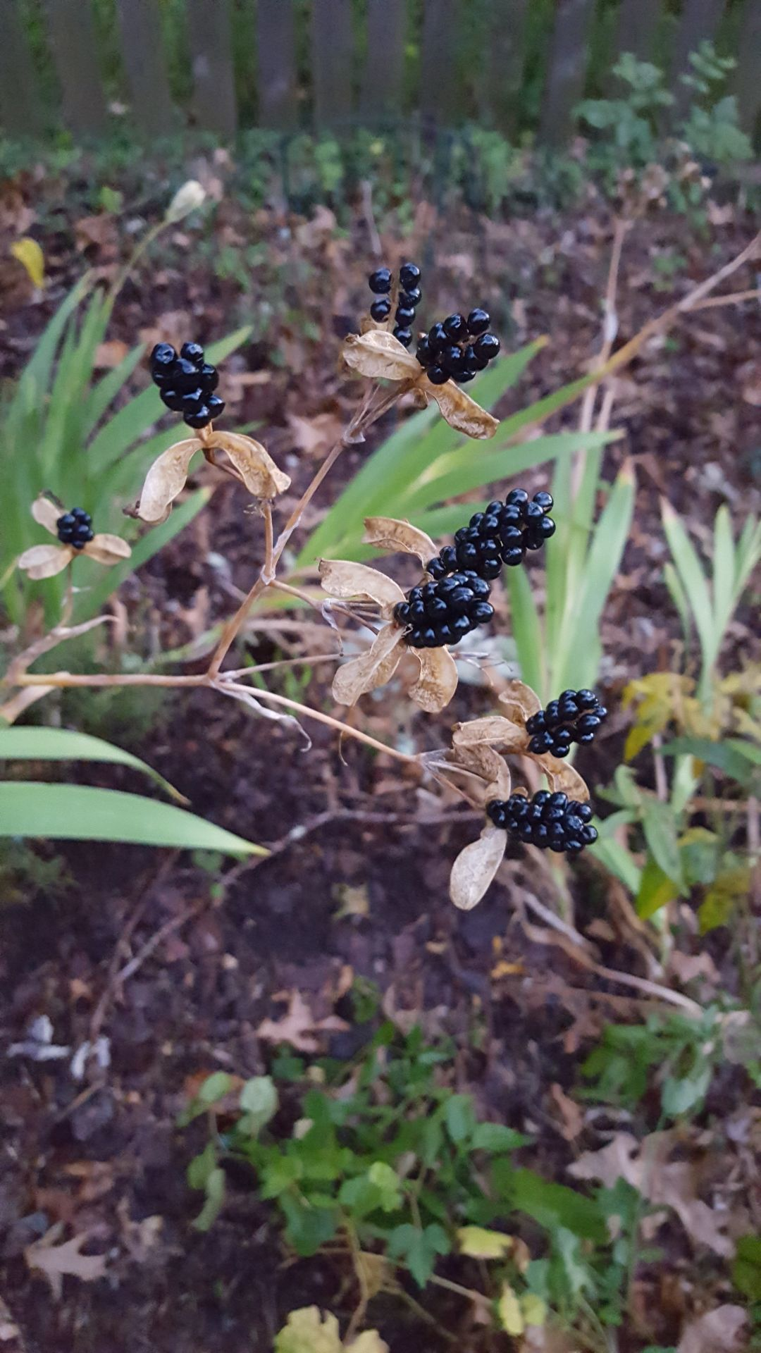 20190728-gm-garden-blackberry seed pod.jpg