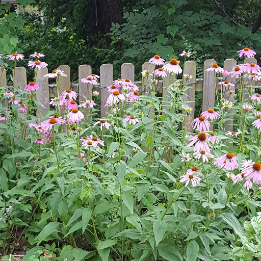 20190407-gm-grow-cone flowers at the little house on  a big hill.jpg