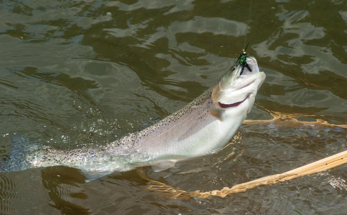 WV's 2019 trout-stocking season holds promise for anglers