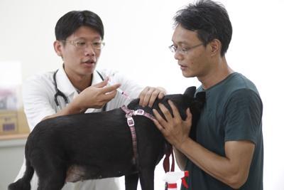 Dog rabies vaccine