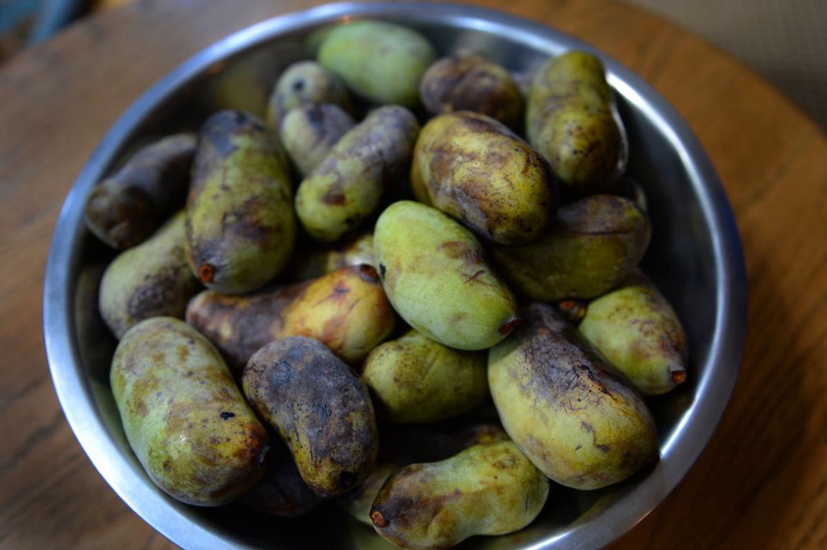 A pawpaw primer: How a forgotten fruit got found again