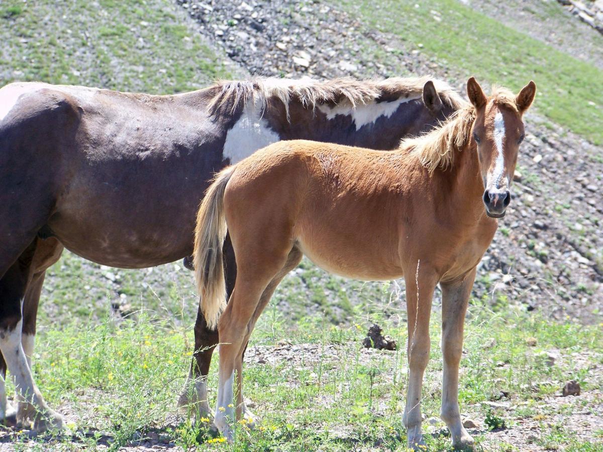 wild horse 2