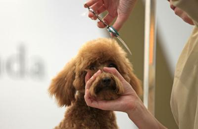 Laws For Paws Wv Pet Groomers Need Vetting Until Stricter Laws