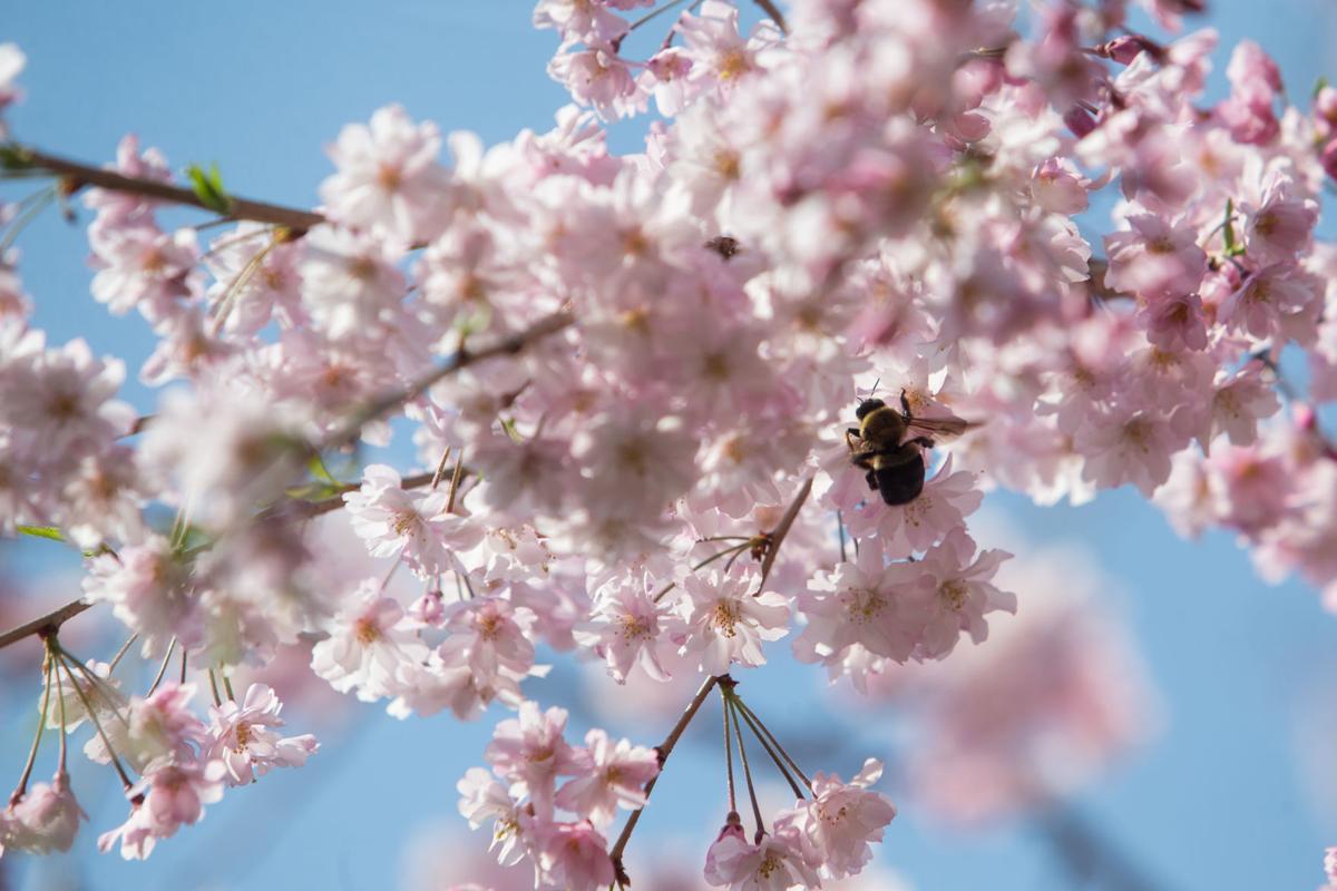 20200329_hd_springtime