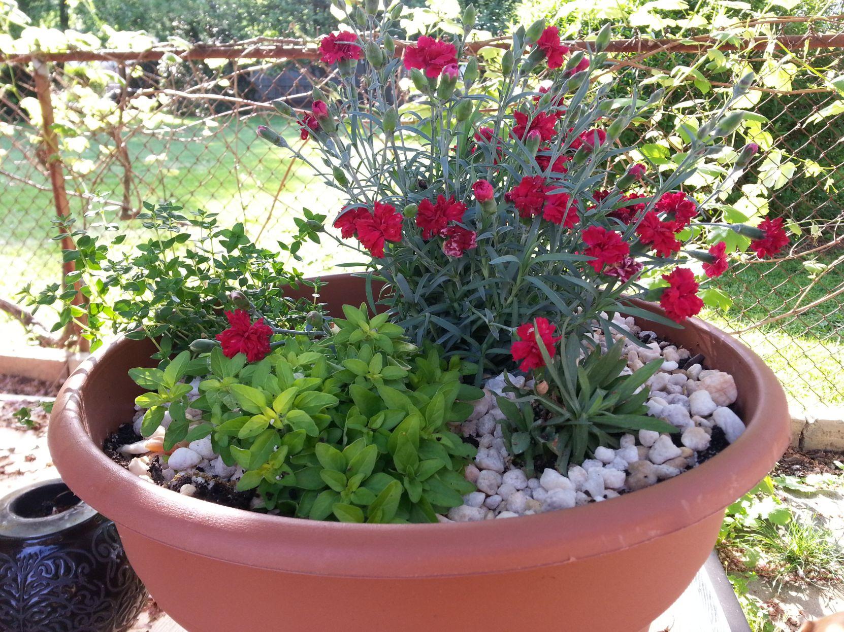 Garden Guru: Container Gardening Brightens Small Spaces