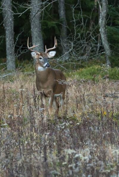 Best Deer