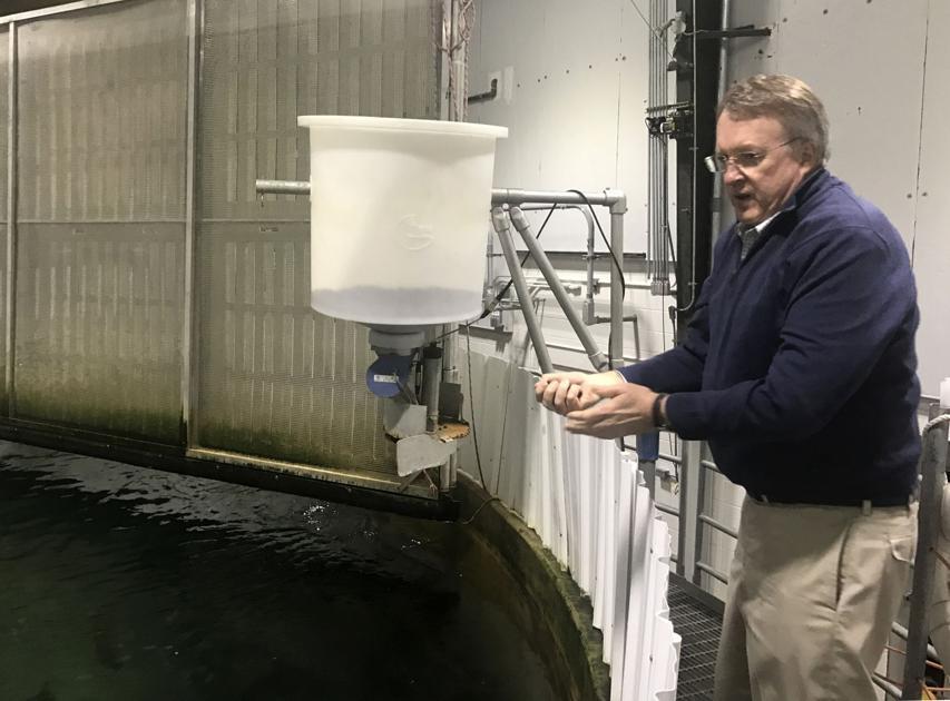 WV lab developing fresh approach to raising Atlantic salmon