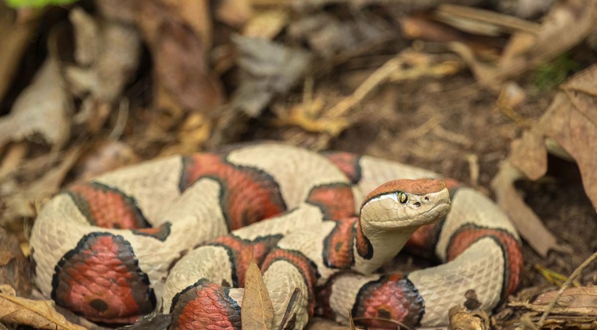 Fake snakes