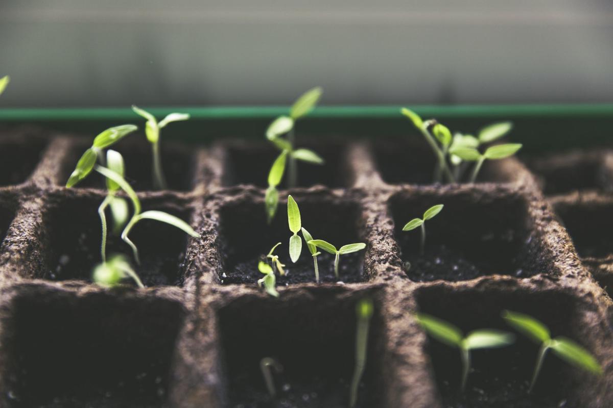 seedlings-pixabay.jpg