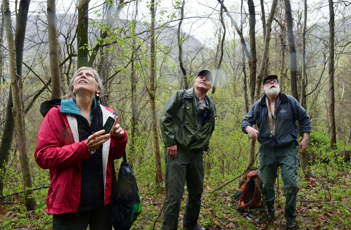 Fayette County stand now part of Old-Growth Forest Network