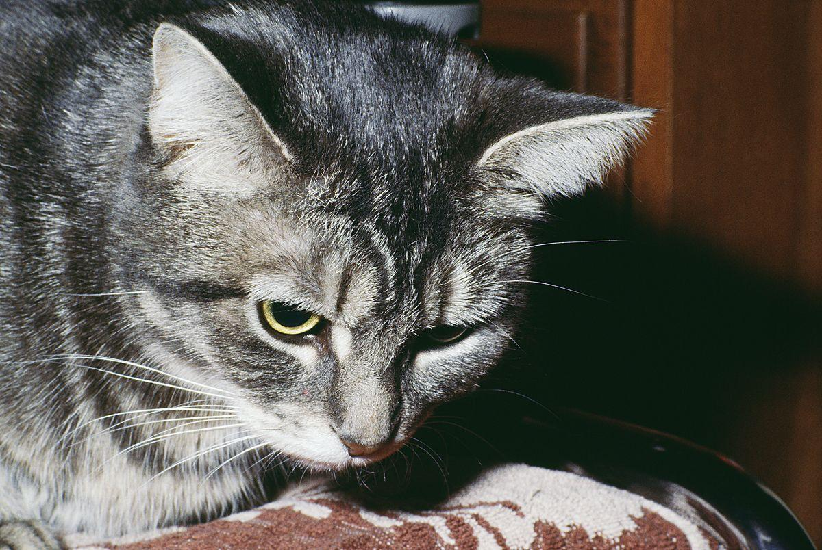 Ask The Vet Should My Cat Have A Feeding Tube Life Wvgazettemail Com