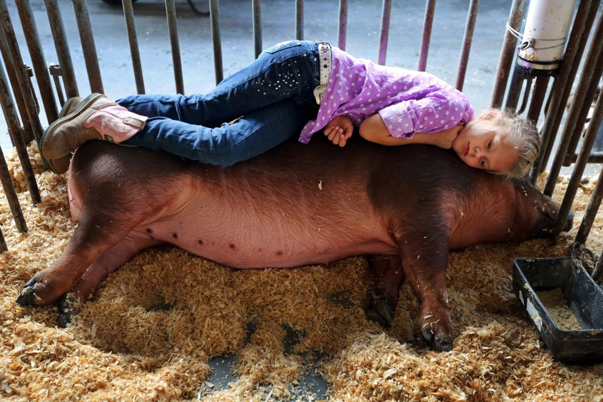Farm kids enter cutthroat livestock contests at state fair   News
