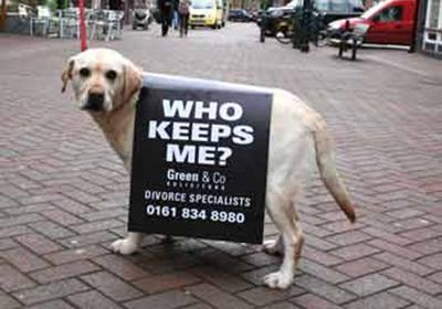 divorce dog.jpg
