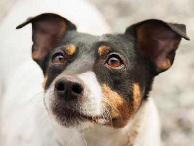 Ask the Vet: Dog with dry eye, clogged nostril needs another look