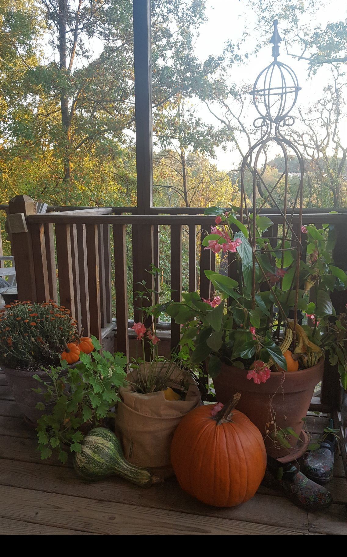 Good to Grow: Turn your garden into a place to celebrate fall ...