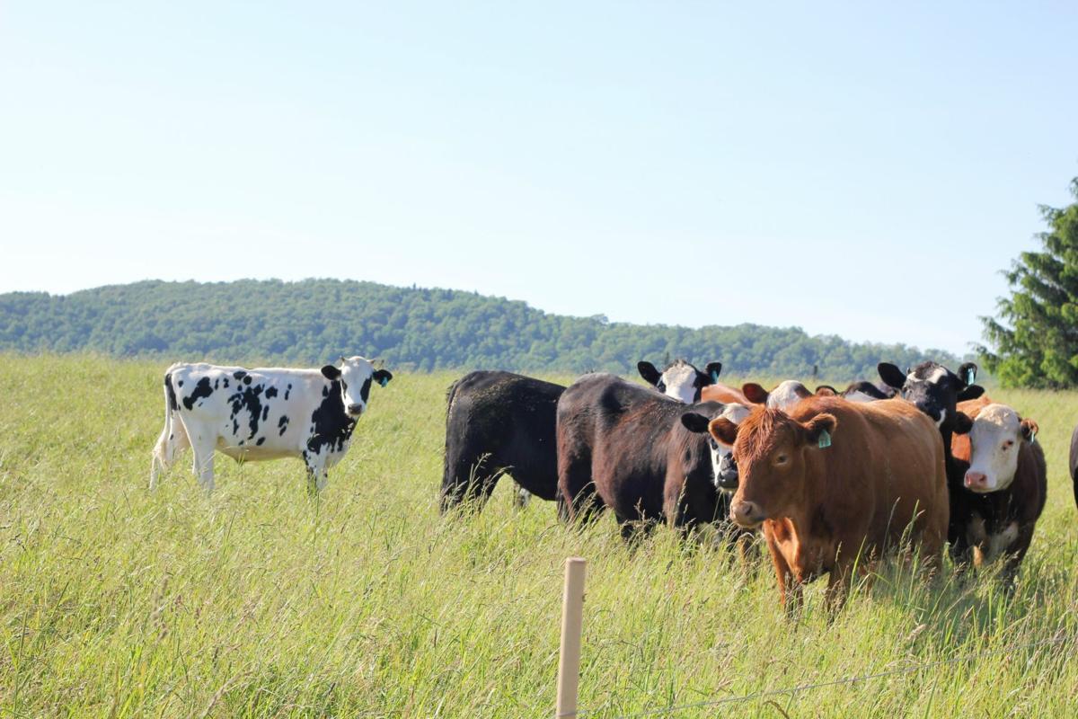 Preston farm focused on livestock's entire life cycle