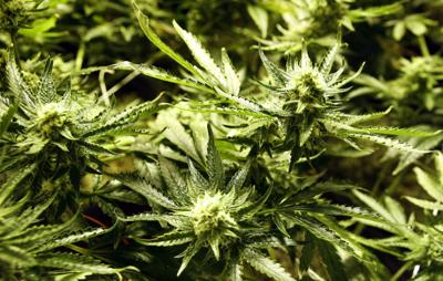 Report: WV could make millions by legalizing marijuana