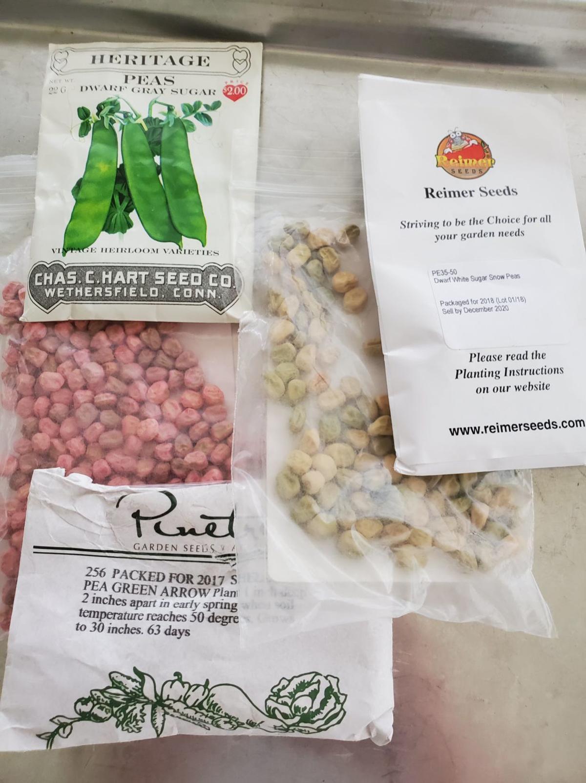 20200301-gm-garden-pea packet photo.jpg