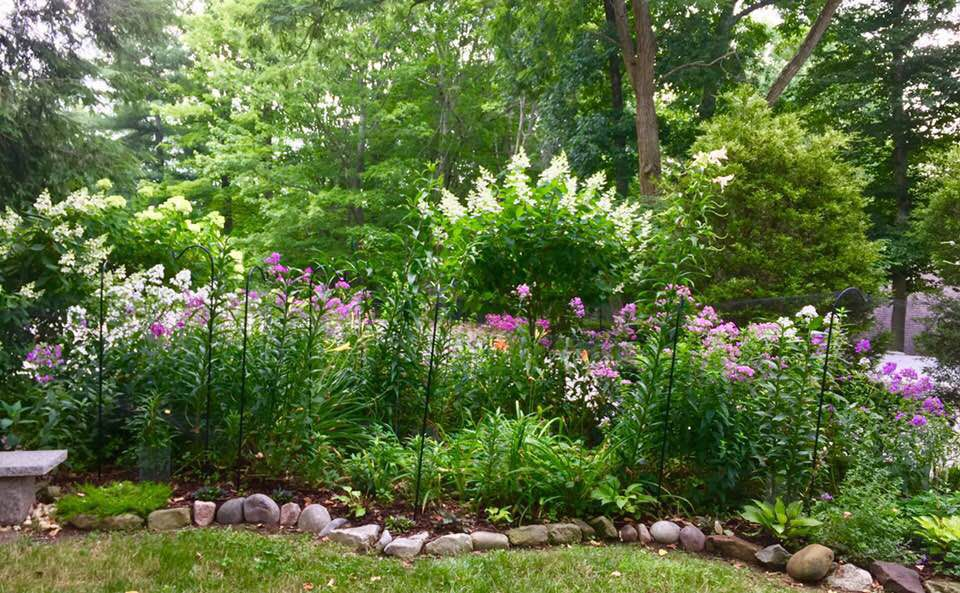 20180729-gm-garden-Sharons lily bed.jpg