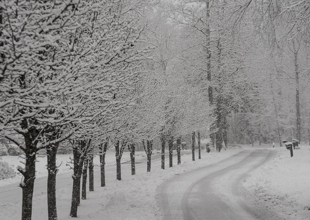 Winter Arrival 9