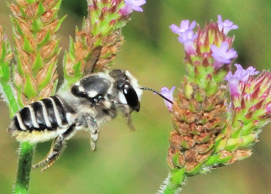 native bees workshop planned saturday metro kanawha