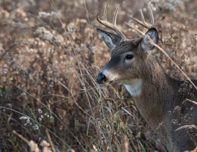 Buck kill