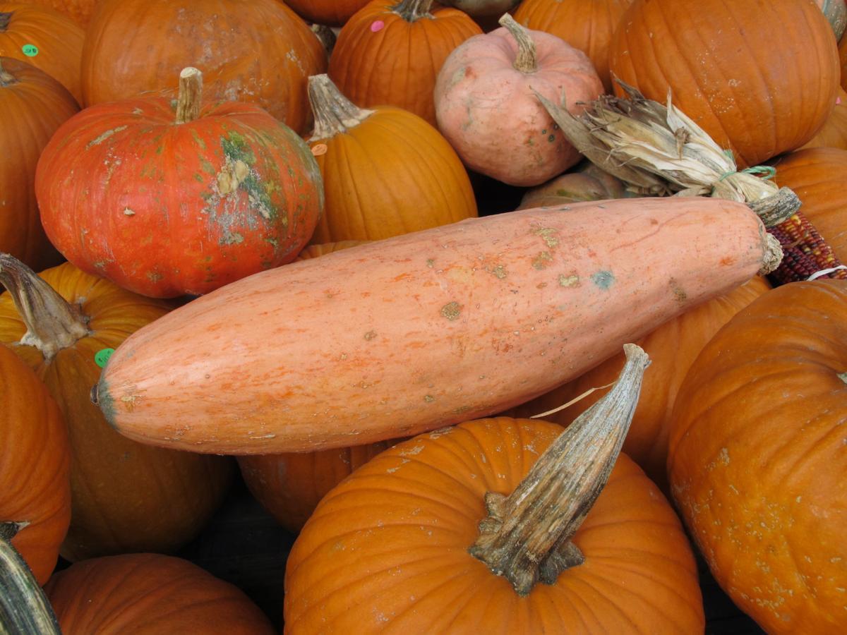 20191002-gm-pumpkin1