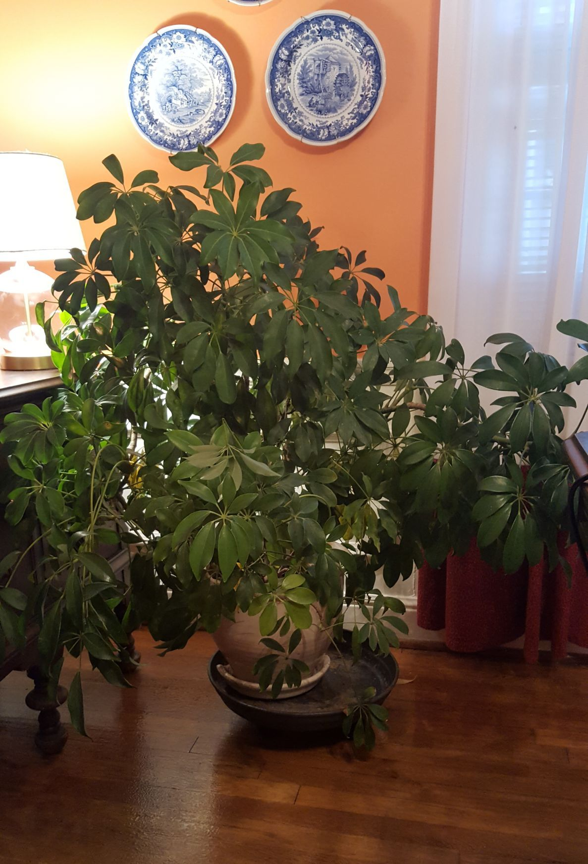 Good to Grow: Moving plants indoors for the winter | Gardening ...