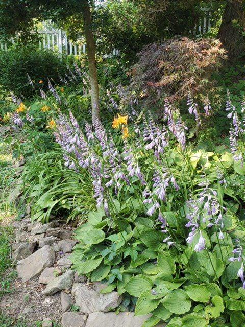 Alma Lee Woodland Garden