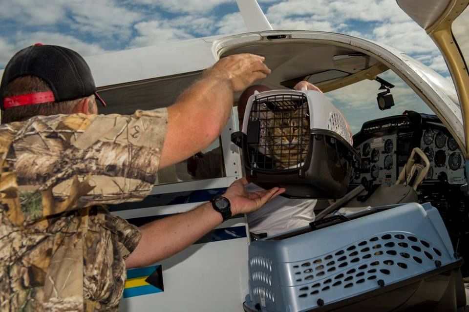 West Virginia pilot helps group rescue cats from Guantanamo Bay