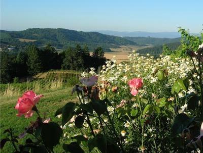 20201018-gm-vines-Willamette-Valley.jpg