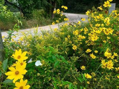 wv wildflowers