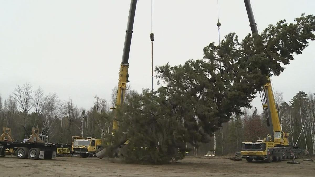 U S  Capitol Christmas tree to make stop in Charleston
