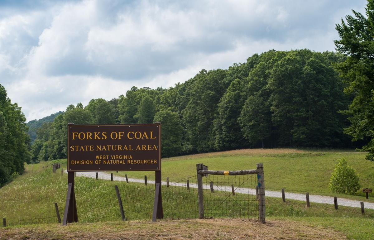 DNR officials outline plans for WV's new Forks of Coal Natural Area