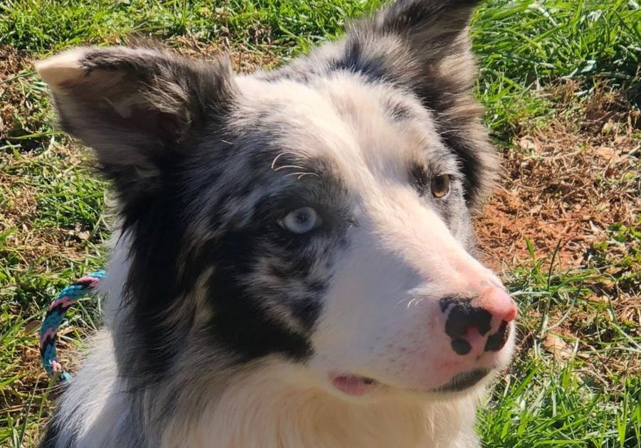 Yeager's critter-chasing canine already a star weeks before debut