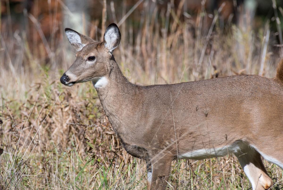 39 family 39 seasons mark wv deer hunters 39 last chance for for Hunt fish va