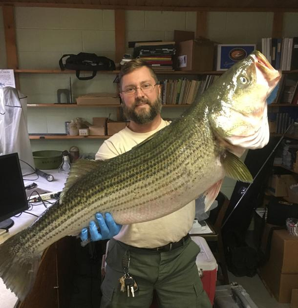 WV's Mount Storm Lake becoming a hotspot for striper fishing