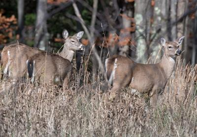 Ten WV parks to host deer hunts this fall