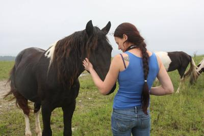 Wild horses present challenges in Southern WV coalfields