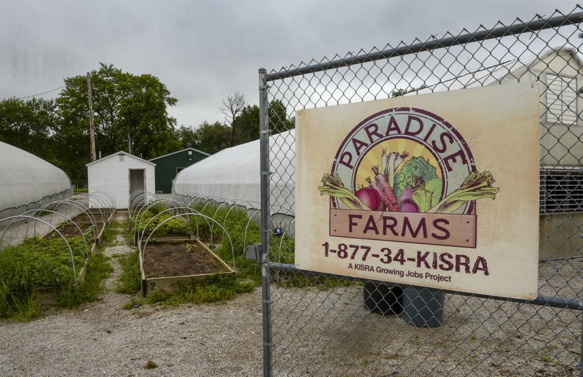 Paradise Farms Kisra