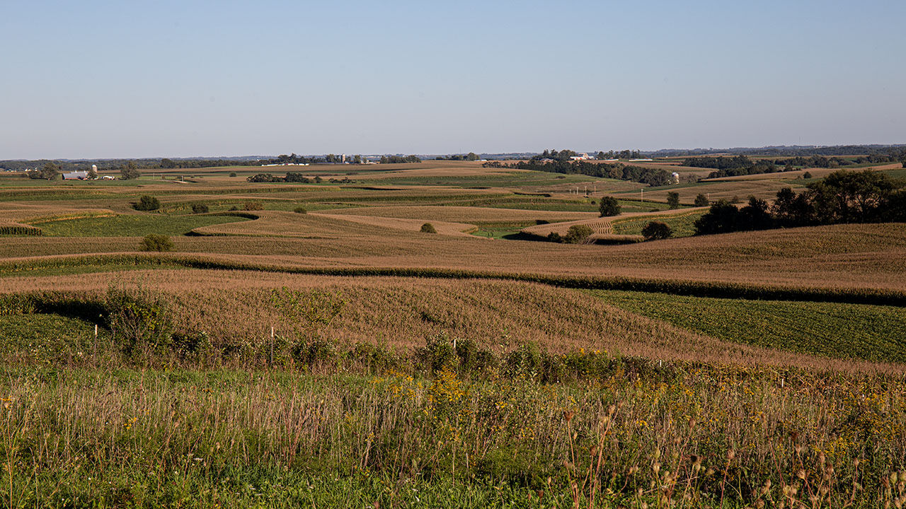 weather photo-corn fields