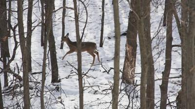 DNR Tracking Deer CWD