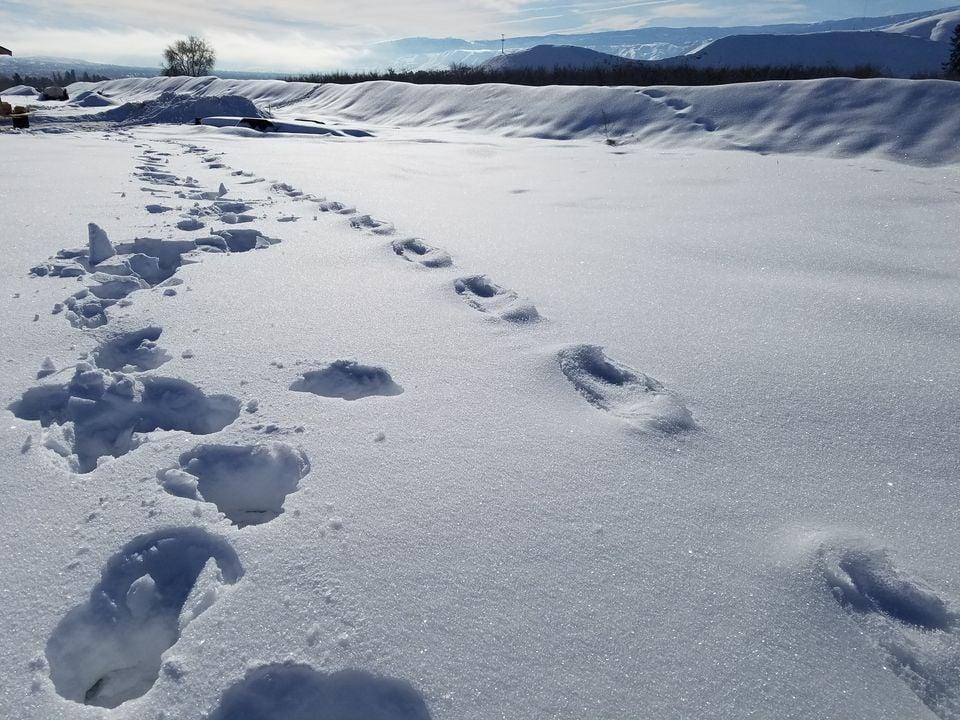 Tracks show sasquatch in sunnyside?