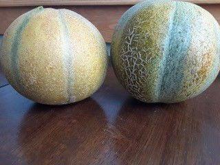 melon - small