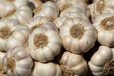 garden - garlic