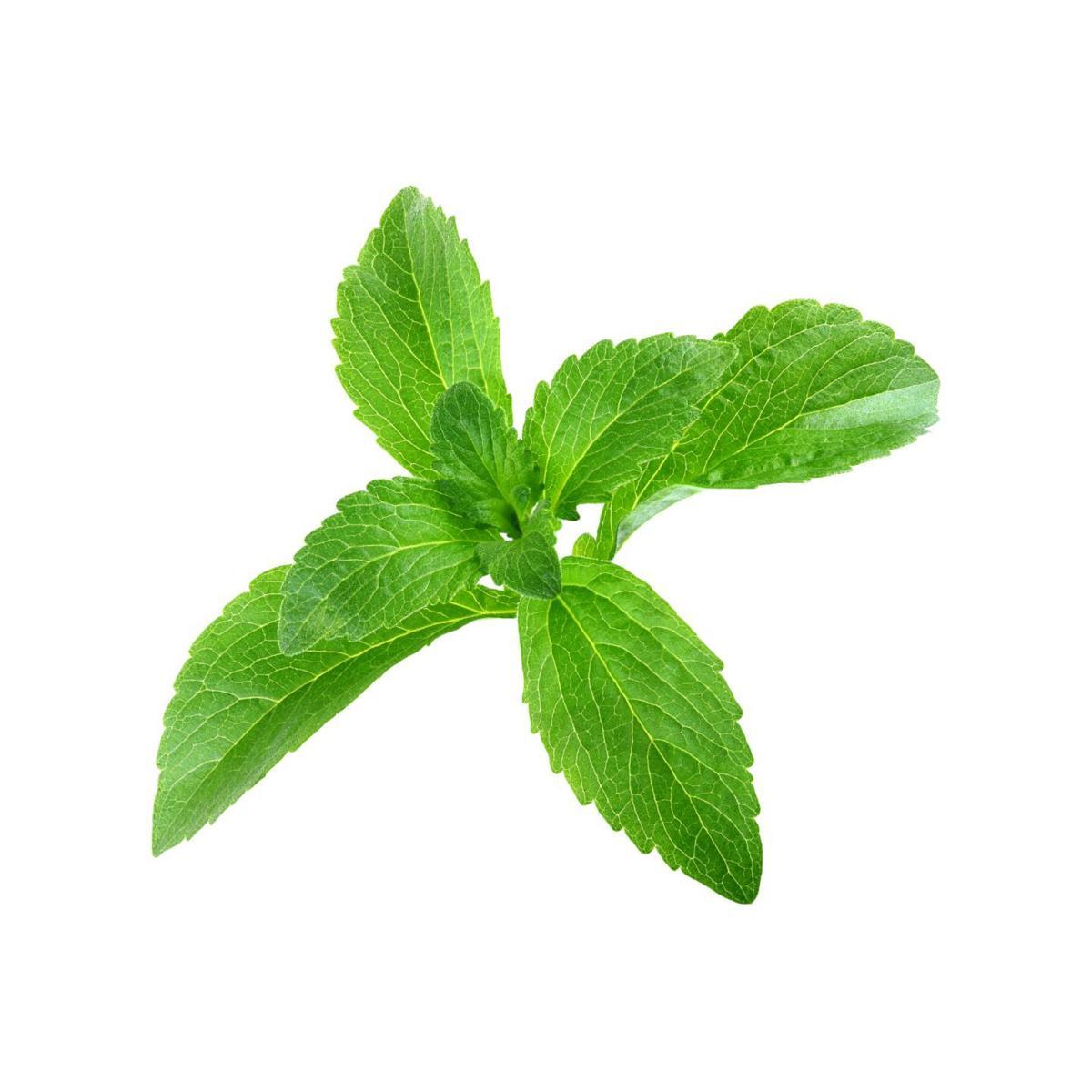 stevia 1