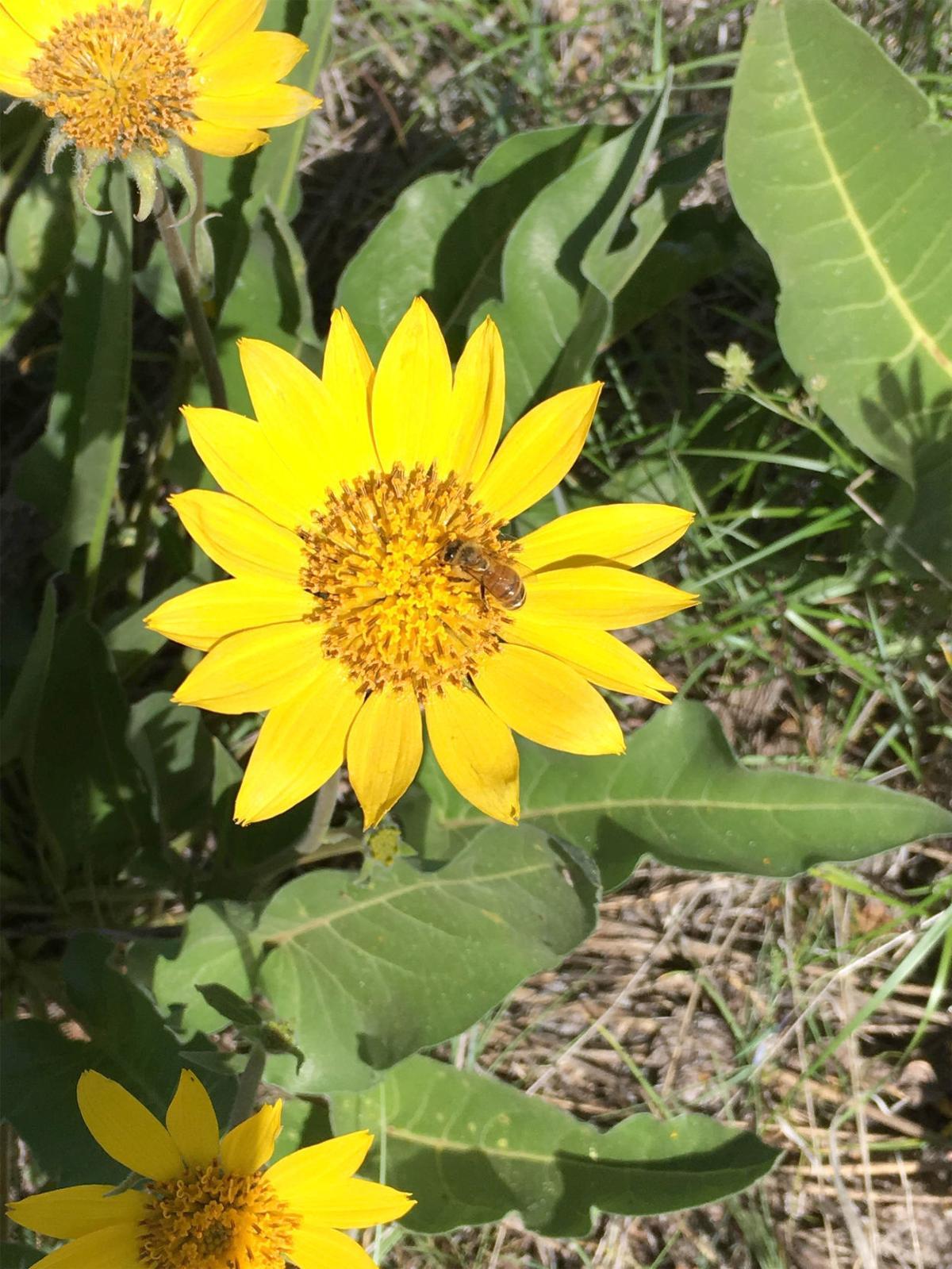 190509-Wildflower.jpg