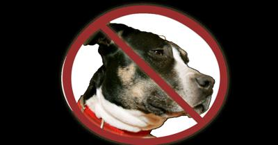 pit bull ban standing